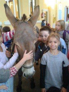 Des ânes à l'école ! ane-225x300